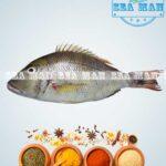 Emporer-Fish-1
